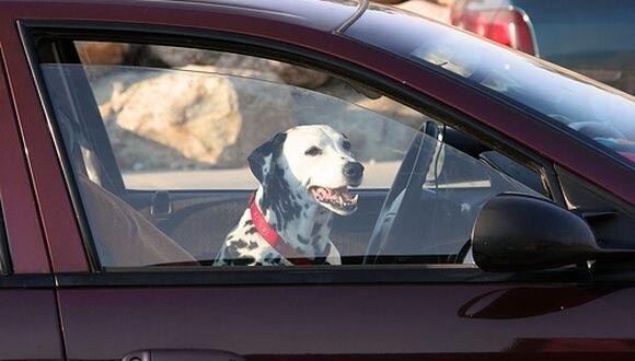 Perro murió luego que sus dueños lo dejaran en el carro