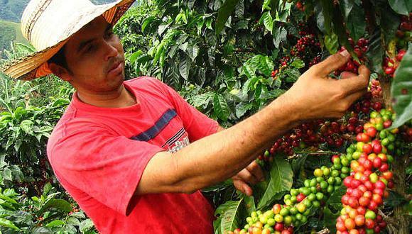 Exportación en zonas rurales generó más de 214 mil empleos en cinco años