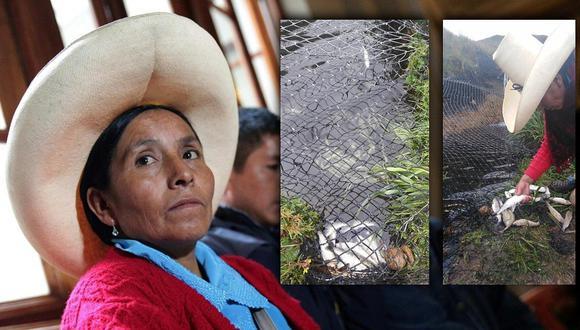 Denuncian envenenamiento a más de mil truchas de la familia de Máxima Acuña (FOTOS)