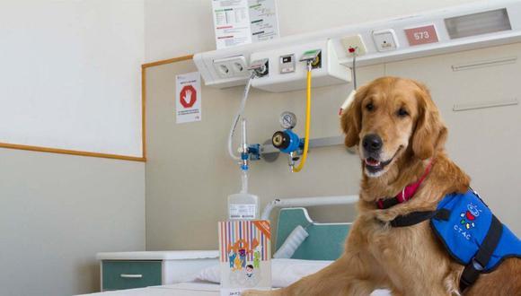 ¿Cómo están ayudando los perros de terapia a combatir contra el coronavirus? (Foto: El Sumario)