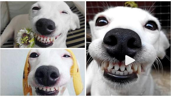 """Instagram: El """"perrito sonriente"""" que enternece a cibernautas (VIDEO)"""