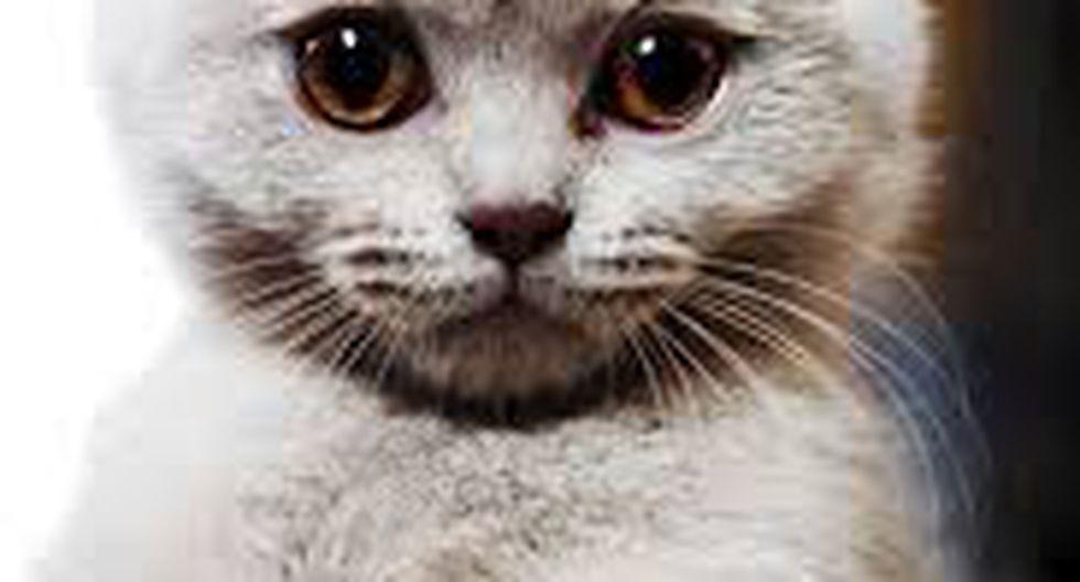 """Día del Gato: El primer 'cat café' de España estrena el """"Festimiau"""" (FOTOS)"""