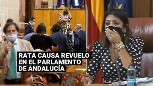 Una rata apareció en el pleno de Andalucía y alteró la tranquilidad de los legisladores