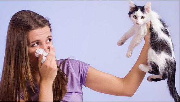 Lanzarán este año la primera vacuna contra la alergia a los gatos