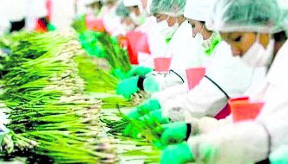 Agroexportaciones crecieron 5% en primer trimestre de este año