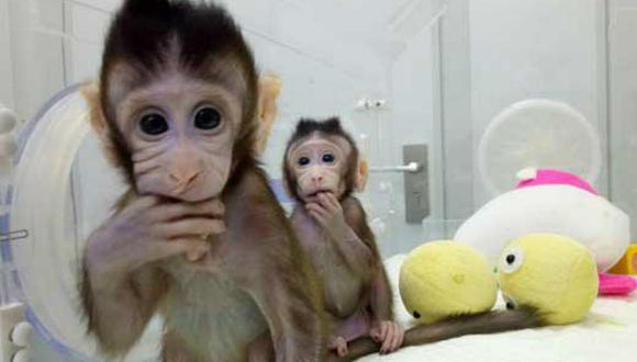 """Animalistas sobre clonación de monos: """"Es un espectáculo de terror"""""""