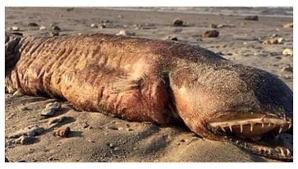 Extraña criatura que apareció tras paso de huracán Harvey desconcierta a científicos (FOTOS)