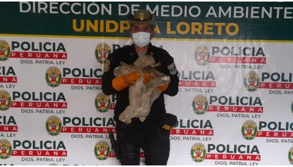 Policía rescató a un perezoso ambulante en Loreto. (Foto: Difusión)