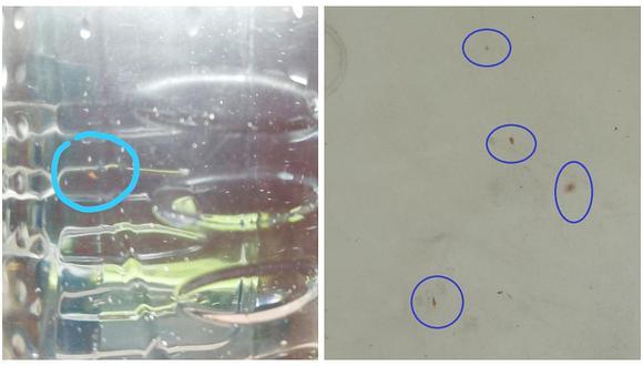 Pasco: habitantes toman agua potable contaminada con pulgas