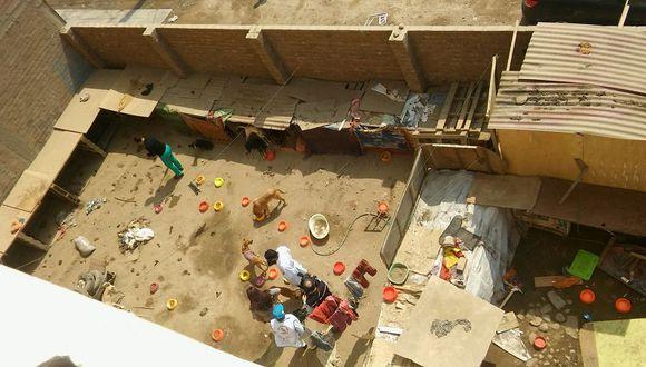 San Martín de Porres: Denuncian mal estado de albergue para animales desamparados