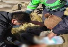 Arequipa: Anciano resultó herido tras enfrentarse a puma andino para salvar su ganado