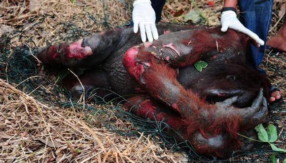 Tres orangutanes mueren quemados vivos en Indonesia