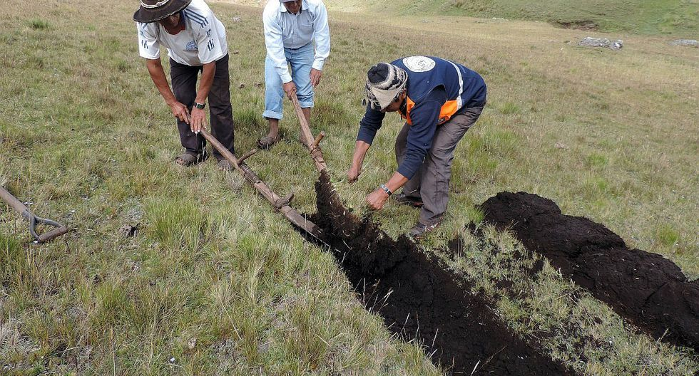 Instalarán más de tres millones de plantones en el Valle Sagrado de Los Incas (FOTOS)