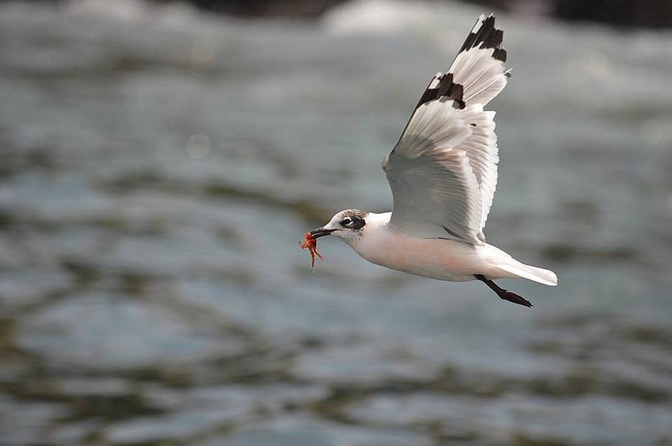 El aislamiento social permitió que las aves recuperen sus espacios naturales (FOTOS)