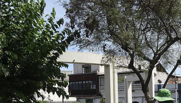 Depredación de árboles en Cayma sin control de municipio