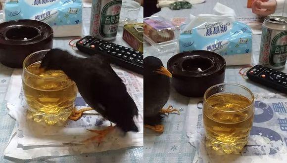 Sujeto graba a pájaro 'ebrio' y genera indignación en las redes sociales (VIDEO)