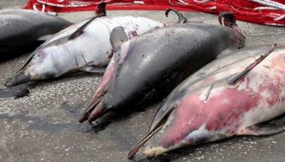 Asociación mundial de zoológicos y acuarios expulsa a Japón por cazar delfines