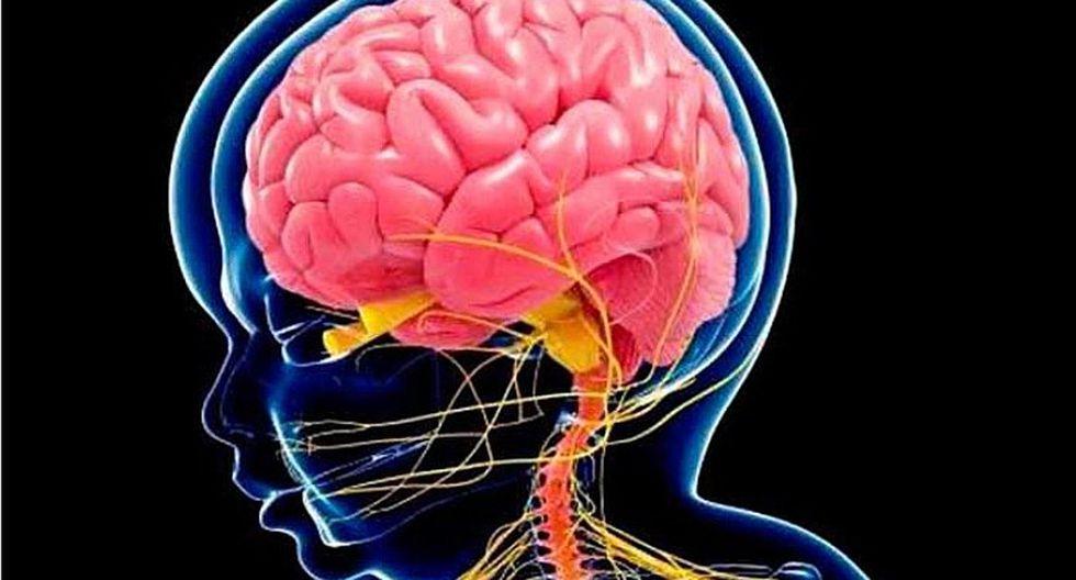 Altos niveles de DHA en la madre influyen en desarrollo cerebral del bebé