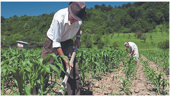 """Presidente de Conveagro dijo que la demora de préstamos del FAE-Agro """"pone en riesgo"""" la seguridad alimentaria, dado que los productores agrícolas ya no tienen capital para sembrar."""