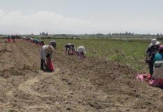 Agrobanco: Más de 28,500 agricultores obtuvieron préstamo por primera vez