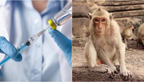 """La vacuna de Estados Unidos y Moderna produce inmunidad """"robusta"""", según estudio con primates"""