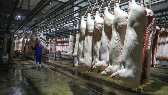 La peste porcina africana no es zoonótica, por tanto el consumo de carne de cerdo no representa un peligro para el ser humano. Sin embargo, es letal para todos los porcinos. (Foto: AFP)