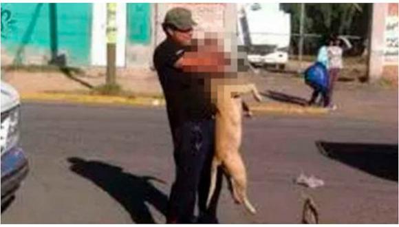 """Ahorcó a pitbull en plena calle porque temía que """"muerda"""" a personas"""