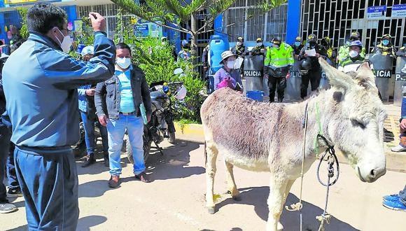 Llevaron burro a municipio