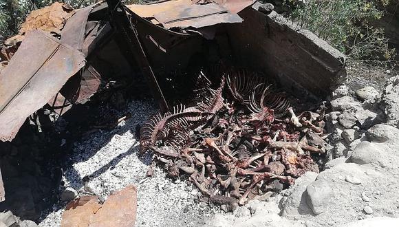Entierran 500 kilos de carne y huesos de caballo y jumento