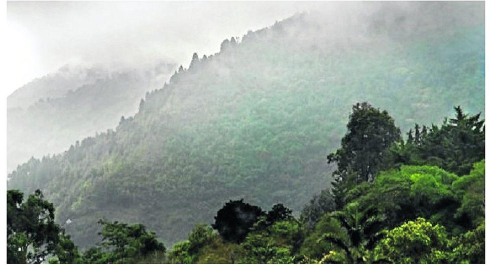 Friaje ingresará a la Selva en lamadrugada de hoy miércoles