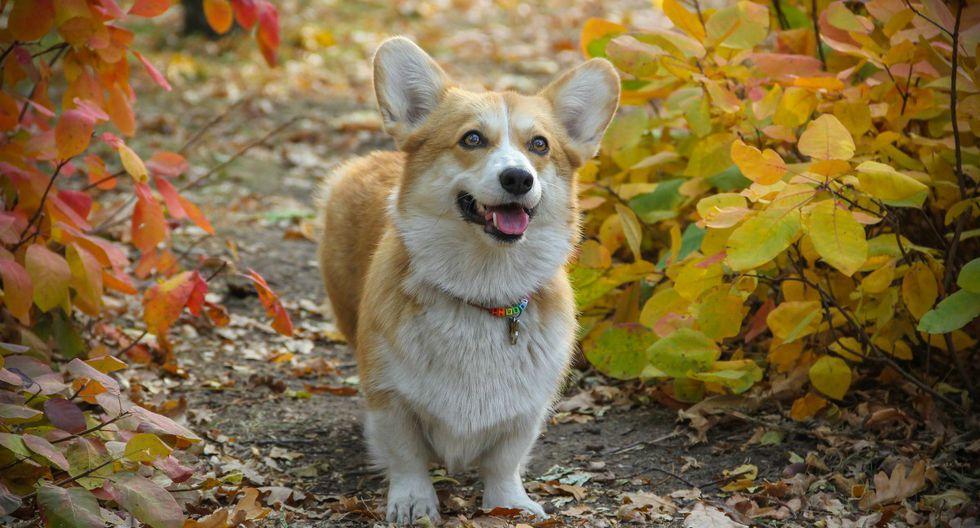 Perros: ¿por qué tu mascota se alegra al verte? (Foto: Pixabay)
