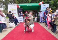 Vacunapet: Perros y gatos podrán ser vacunados con disfraces este miércoles 29 en Surco