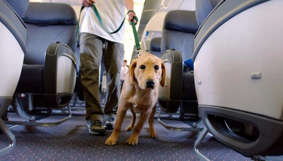 Expulsan a perro lazarillo de avión y pasajeros se niegan a volar en solidaridad