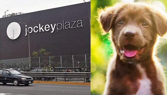 Abren el primer centro de adopción de mascotas en el Jockey Plaza