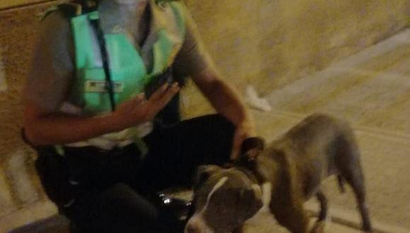 """Hallan a """"Moly"""", el can que fue robado al occiso"""