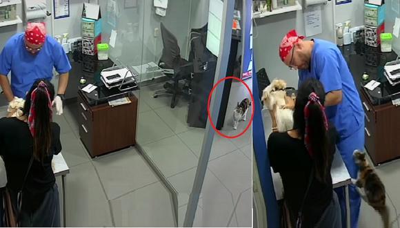 Si bien dicen que los gatos no se llevan con los perros, este video demuestra lo contrario ( TikTok)