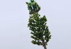 """MTC: Antenas """"tipo árbol"""" garantizan buena comunicación y son amigables con el paisaje"""