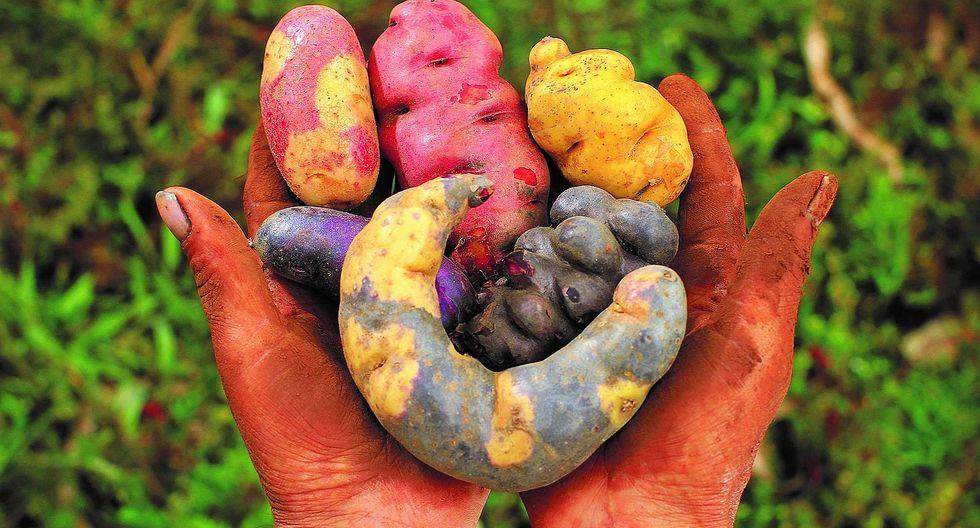 Cusco será el centro del debate mundial sobre seguridad alimentaria y cambio climático