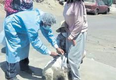 Campaña contra la rabia canina no se detiene en Arequipa