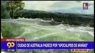 """Australia: Habitantes de una ciudad sufren del llamado """"Apocalipsis de arañas"""" ante incremento de la humedad (VIDEO)"""