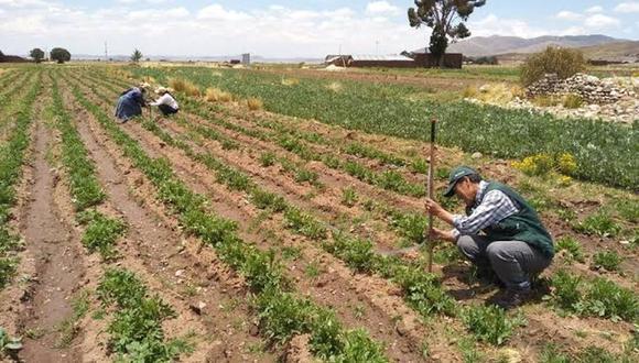 Juan Manuel Benites señaló que las siembras ya están empezando y las cajas rurales y municipales todavía tienen que calificar a los beneficiarios, que serían solo unos 270 mil productores. (Foto: Difusión/Minagri)