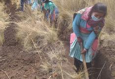 Mujeres de Huancavelica inician año laborando en canales de riego