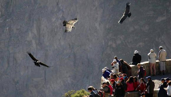 Observar el planeo de los cóndores es el motivo de viaje al Cañón del Colca en Arequipa (Foto: Cañón del Colca)