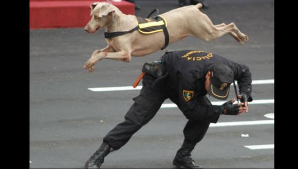 Abogada presentaría un recurso de acción popular contra la Unidad Canina.