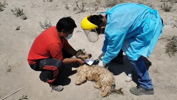 Municipios deben sancionar a quienes tienen a sus mascotas en la calle. Distrito tiene el 60 por ciento de los casos detectados. (Foto: Correo)