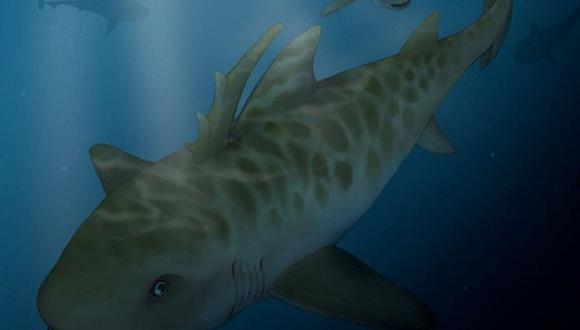 Puno: Hallan restos de tiburón de hace 400 millones de años [FOTOS]