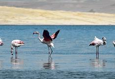 """""""Paracas: entorno y biodiversidad"""": Libro relata los programas de prevención"""