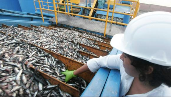 La cuota para consumo humano podrá ser modificado en función al seguimiento permanente de la pesquería de anchoveta que realiza el Instituto del Mar del Perú. (Foto: GEC)