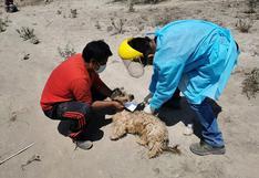 Rabia canina se concentra  en Cerro Colorado
