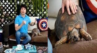 Conoce la tortuga adoptada por Bruno Pinasco